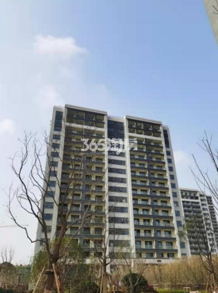 扬子江金茂悦C5-5#施工进展(11.30)