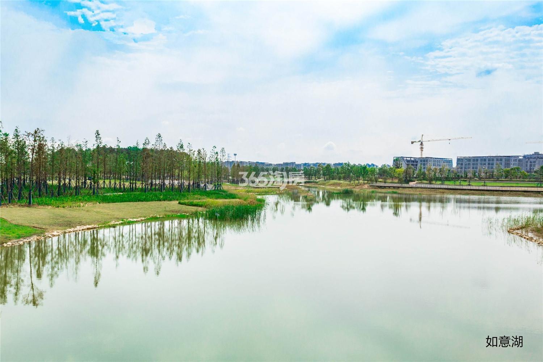 蓝天慧融花园周边如意湖(12.31)
