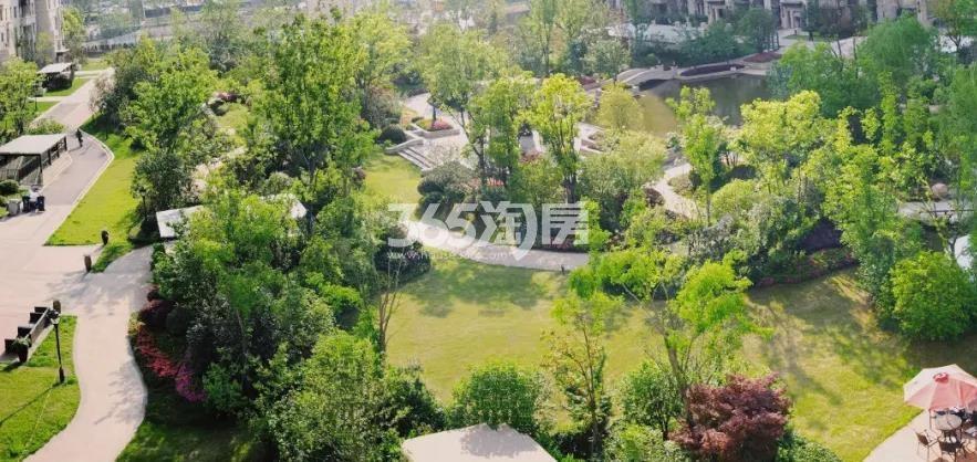 金象朗诗红树林实景图