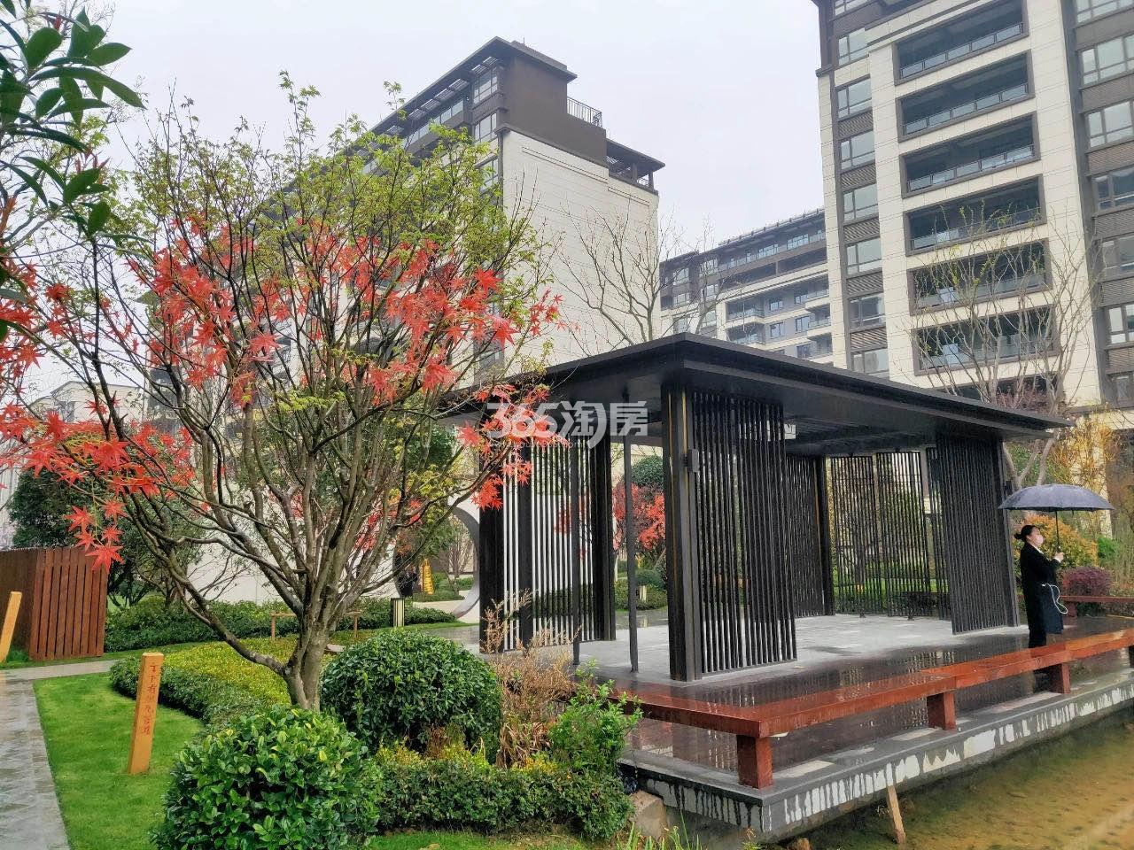 金隅紫京叠院绿化景观实景图(11.26)
